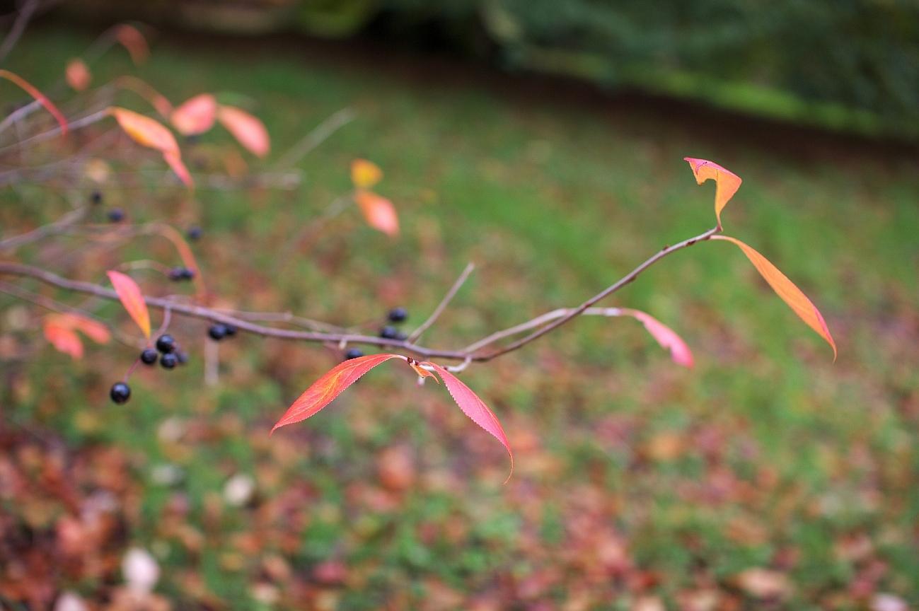 dawyck_botanic_03.jpg