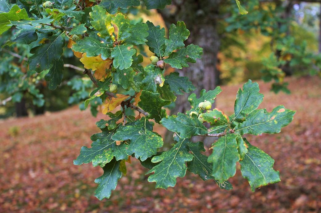 dawyck_botanic_12.jpg