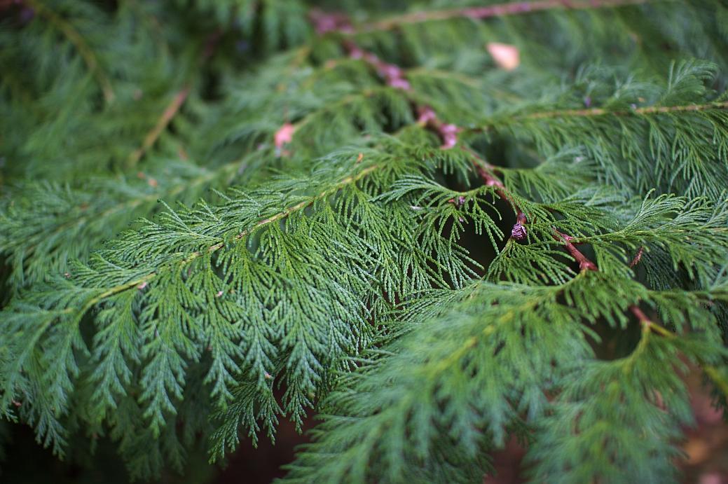 dawyck_botanic_13.jpg
