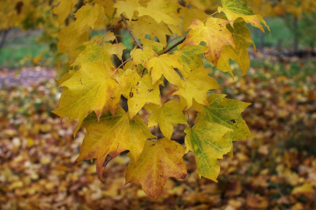 dawyck_botanic_15.jpg