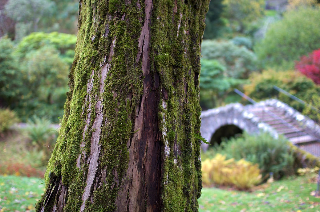 dawyck_botanic_21.jpg
