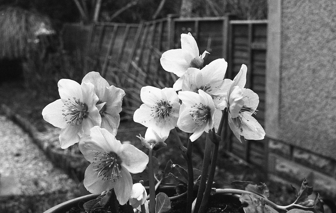 march_of_film_02_Flowers.jpg